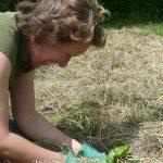 Allgemeines zum Thema Mulchverfahren beim Gemüse